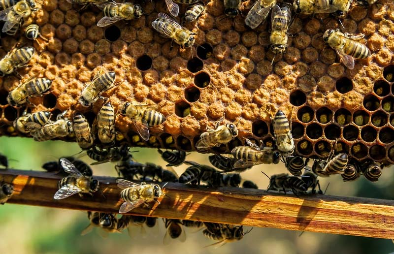 Tipos de colmenas de abejas