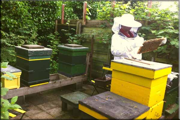 apicultor traje