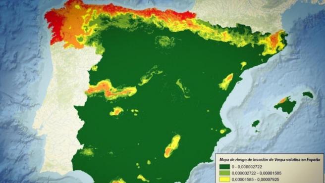 Vespa Velutina en España